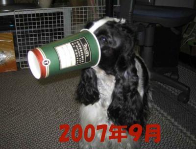 2008-1-25-2-9-18.jpg