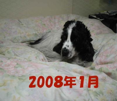 2008-1-25-7-1-23.jpg
