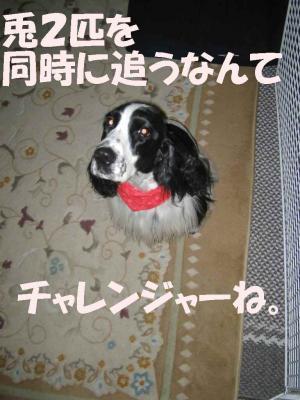 2008-3-1-2-1.jpg