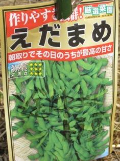 農園の枝豆 (3)
