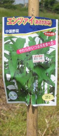 播種から (2)