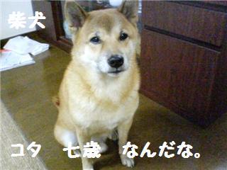 コタです(・ω・)ノヨロシク!