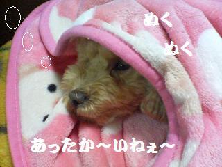 う~ん眠い、暖かい