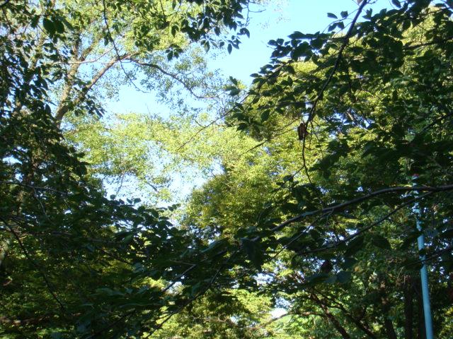 20070926-自然
