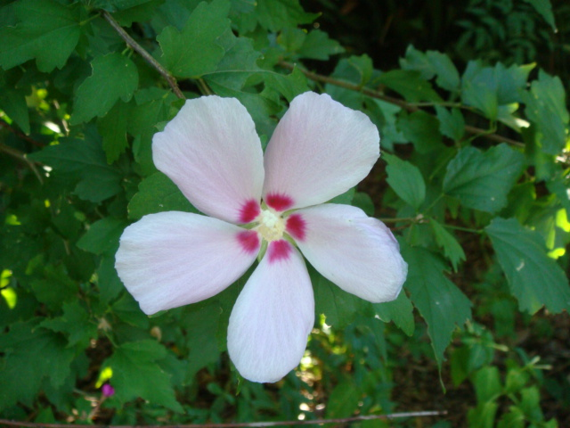 20070926-花