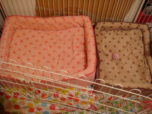 20071006-ワン用ベッド?