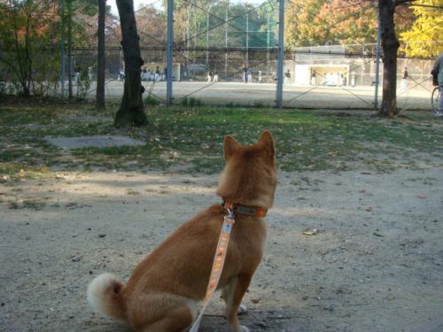 20071125-散歩(蓮)?