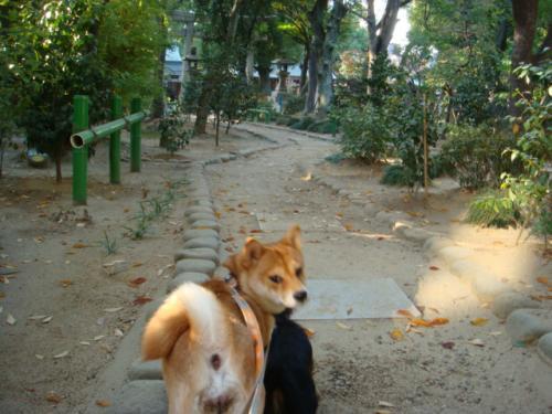 20071125-散歩(生玉さん)?