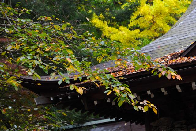 青森県 平川市 猿賀神社 紅葉