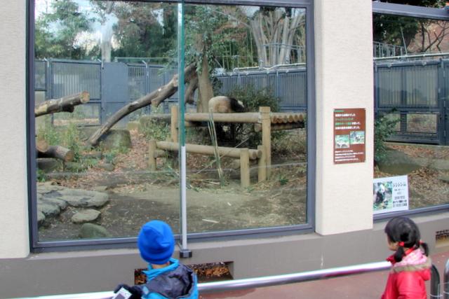 東京 上野動物園