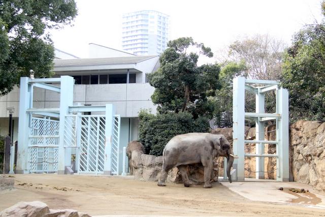 東京 上野動物園 ゾウ