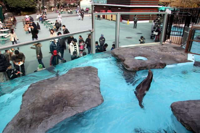 東京 上野動物園 アザラシ