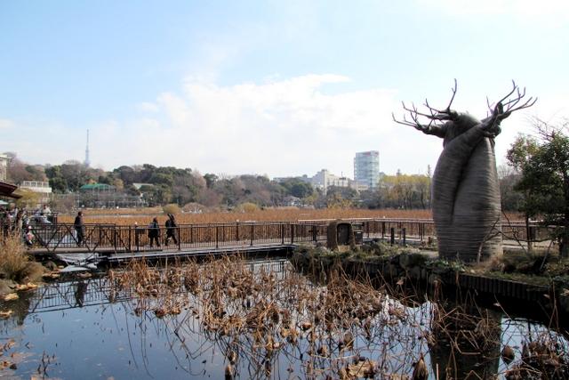 東京 上野動物園 不忍池
