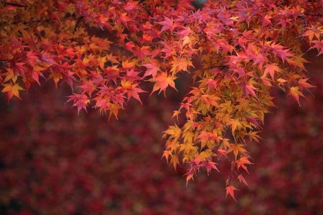 弘前の風景