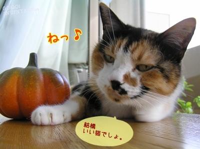 いい猫でしょ?