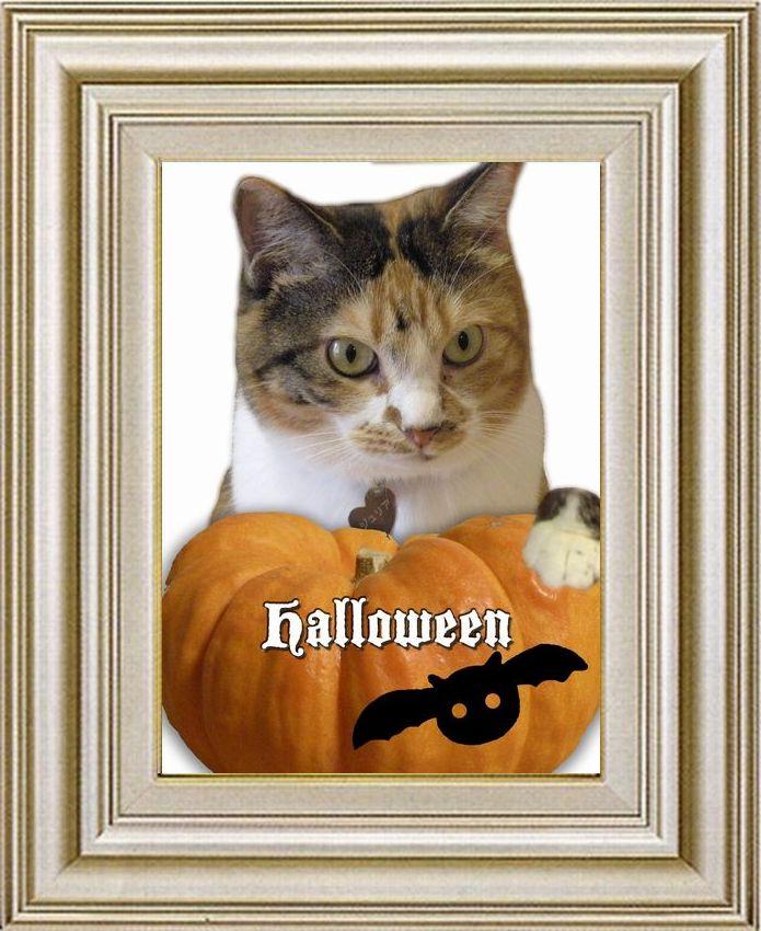 ねこ 猫 ハロウィン祭り 21番