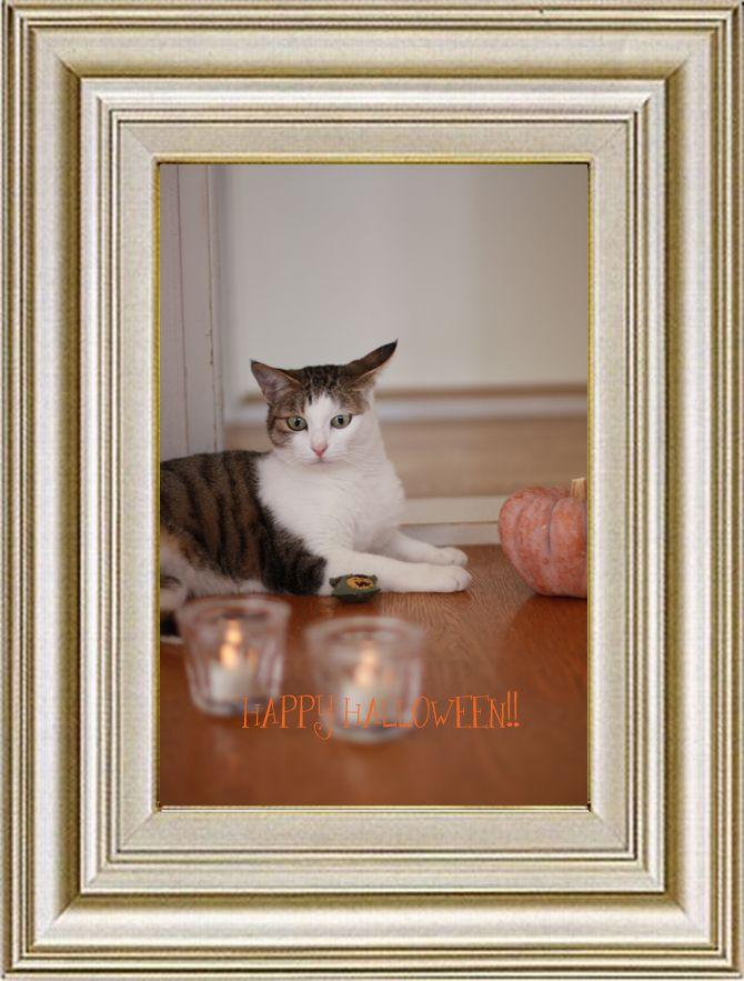 ねこ 猫 ハロウィン祭り 22番 まやさま家 今年のだい子のHalloween祭りは?