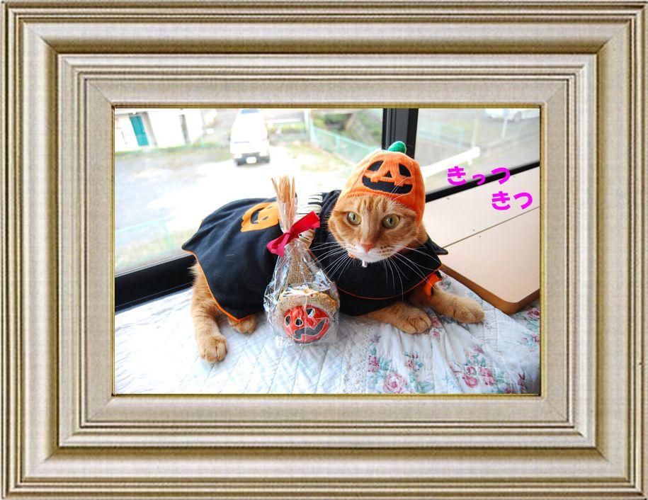 ねこ 猫 ハロウィン祭り 23番 funiさま家 くなちゃんのHalloween