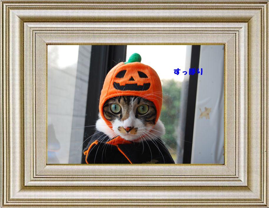 ねこ 猫 ハロウィン祭り 24番 funiさま家 ぽむ君のHalloween