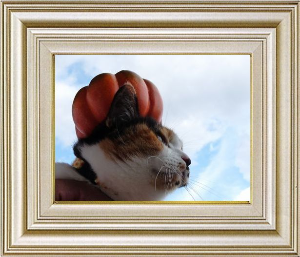 ねこ 猫 ハロウィン祭り 25番 すなふ家 「レイコさんの秋空とパンプキン帽」