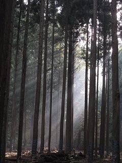 20091018生杉 003
