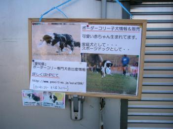 そらファミリーの子犬情報宣伝