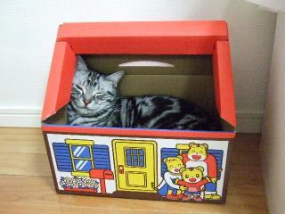 2009_0901cats0010.jpg
