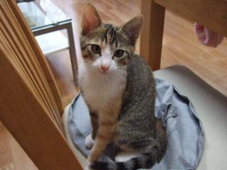 2009_0901cats0021.jpg