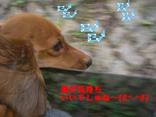 CIMG0113.jpg