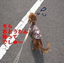 CIMG0122.jpg