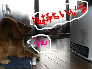 CIMG0816_20071226212015.jpg