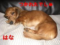 CIMG9574.jpg