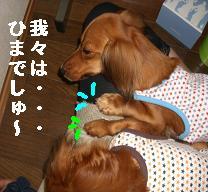 CIMG9612.jpg