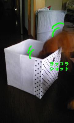 Image681.jpg