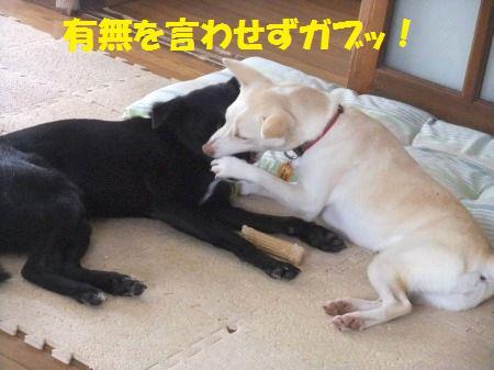 2011_1109_3.jpg