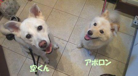 2011_1126_apollon_4.jpg