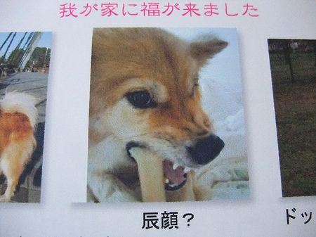 2012_0110_1.jpg