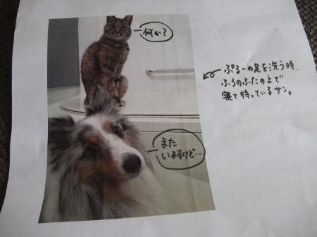 2012_0217_3.jpg