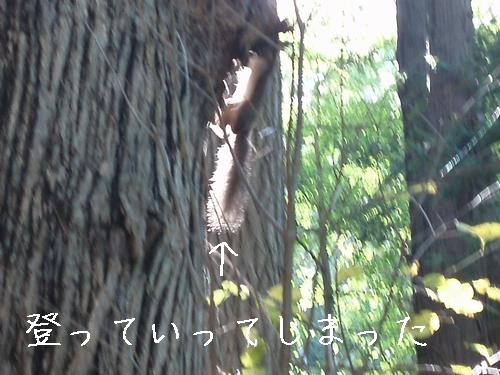 ezorisu2009100304.jpg