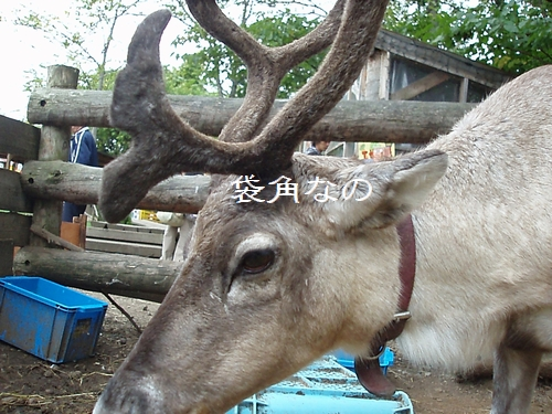 hukuroduno_20090922102024.jpg