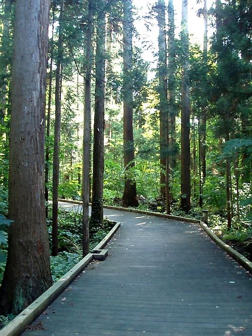 maruyamaforest.jpg