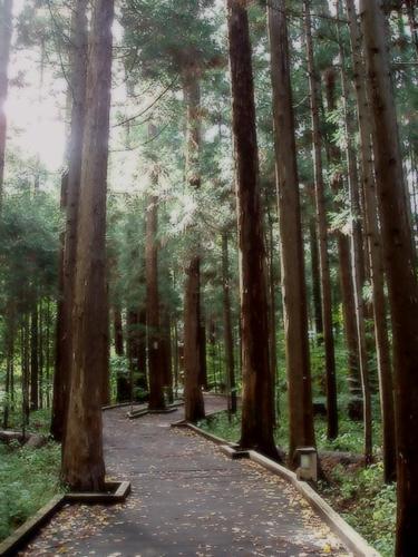maruyamaforest2009101201.jpg