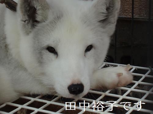 tanakayuko02.jpg