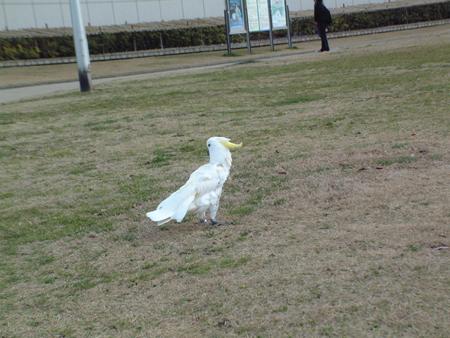 お散歩開始2