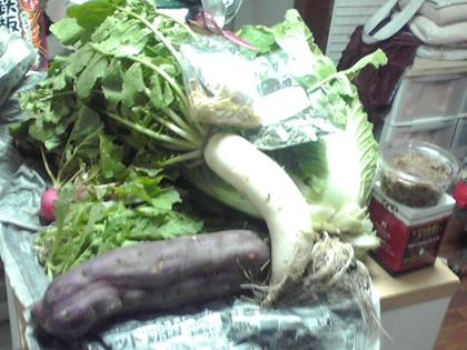 自家取りお野菜