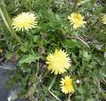 春のお花1