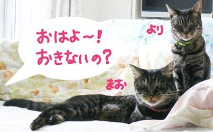 asanomaoyori.jpg