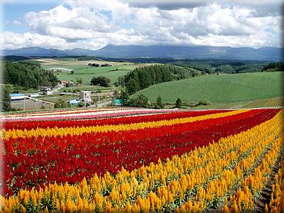 P909色彩の丘