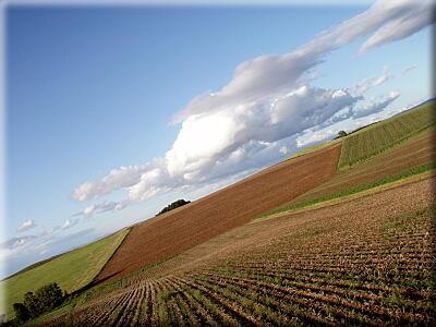 P909収穫の畑