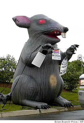 ba-odd_giant_rat_0499759764.jpg